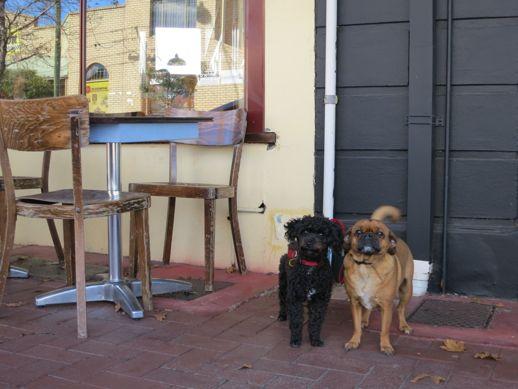 Shop-a-dog 6