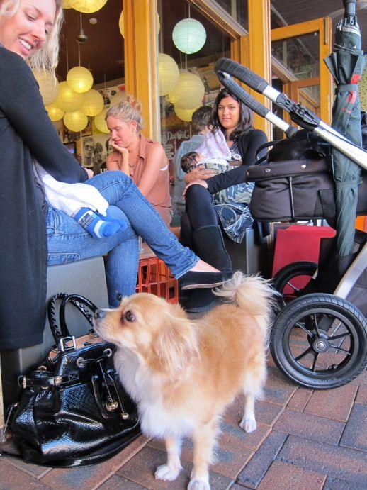 Shop-a-dog 5